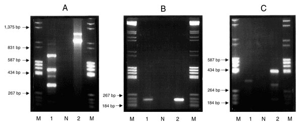 Agarose (1.5%) gel electrophoresis in 1x TAE buffer containing 0.5 µg/ml ethidium bromide. Purified genomic DNA was used as the template in a PCR reaction with the primers Int 1 F 5'-GGC ATC CAA GCA CGA AG-3' and Int 1 B 5'-AAG CAG ACT TGA CCT GA-3' (12). Lane M contains an equal mixture of molecular weight markers grades III and V (Boehringer Mannheim, Germany), Lane N is the negative containing all reaction components with the exception of template DNA, Lane 1, Campylobacter coli CIT-H 6 (IP-I