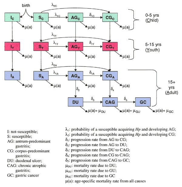 Compartmental model of Helicobacter pylori transmission and disease progression. In this model, the population is divided into compartments according to age, infection status, and clinical state. Boxes represent population subgroups and arrows indicate transitions between subgroups, as well as flow into and out of the population (birth and death).