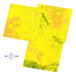Thumbnail of The normalized difference vegetation index (NDVI) scores of the study area by Thematic Mapping bands 3 and 4. Vegetation growth increased from brown though yellow to green. There was a substantial portion of high-risk area (especially the eastern portion of the image) where the NDVI image pixels did not obviously correspond to high-risk areas (see Figure 3 for comparison).
