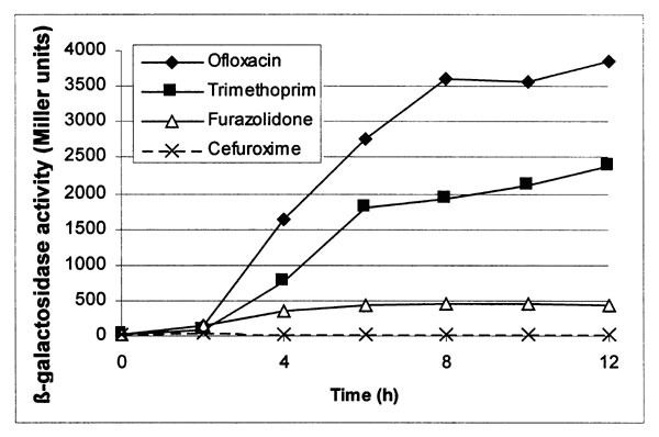 Time course of stx::lacZ induction by antibiotics. Exponential-phase cultures were exposed to the antibiotics indicated for up to 12 h, and whole culture β-galactosidase activities were determined. The exposure levels were cefuroxime 0.625 g/L (MICx1/16), furazolidone 8 g/L (MICx1/4), trimethoprim 0.6 g/L (1xMIC) and ofloxacin 0.1 g/L (2xMIC).