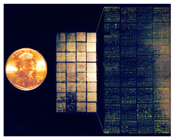 DNA microarray--Lymphochip. (Center) Lymphochip version 8.0, printed on a coated glass microscope slide using a 32-tip printing head, contains 17,856 cDNA clones (overhead illumination) (14). (Left) U.S. penny, for scale. (Right) Scanned image demonstrating differential hybridization of Cy3- and Cy5-labeled cDNA to this microarray. (Illustration by A. Alizadeh, M. Eisen, and P. Brown, Stanford University; and L. Staudt, National Cancer Institute).