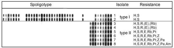 Spoligotypes and drug-resistance patterns of isolates of patient's first (1 and 2, type I) and second culture-positive phase (3-8, type II). The spoligotypes of the first two cultures differ clearly from those of the latter ones. The eight isolates were obtained on the following dates: 1, February 28, 1996; 2, March 17, 1996; 3, June 6, 1996; 4, July 12, 1996; 5, March 15, 1997; 6, April 25, 1997; 7, February 18, 1998; and 8, June 23, 1998. H, isoniazid; S, streptomycin; R, rifampin; E, ethambut