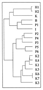 Thumbnail of Dendogram showing genetic relatedness of Salmonella Typhi from Kenya and Asia. H1 and H2: MDR S. Typhi from Hong Kong; K: MDR S. Typhi from Kuwait; B: MDR S. Typhi from Bangladesh; P1-P6: MDR S. Typhi from Pakistan, I: MDR S. Typhi from India. K1-K5: sensitive S. Typhi from Kenya; K6 and K7: MDR S. Typhi from Kenya.