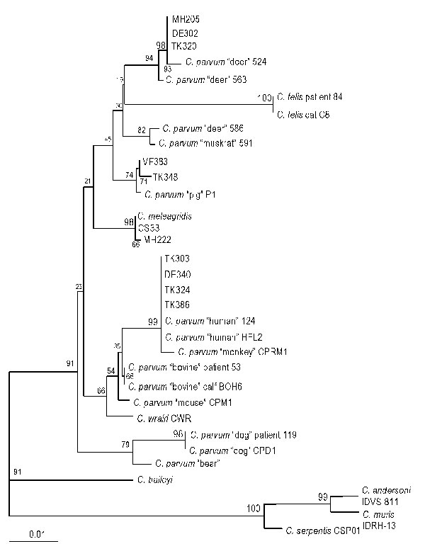 Phylogenetic relationship of isolates from sporadic cases with reference 18S rRNA gene sequences from various Cryptosporidium species and genotypes. Bootstrap values that are >95% are shown in larger font. Bar = 0.01 substitution per site.