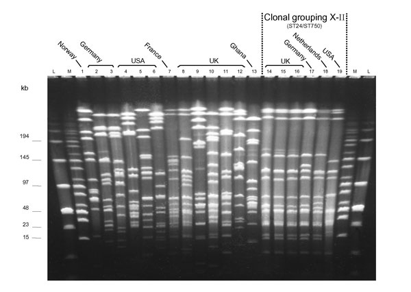 Pulsed-field gel electrophoresis patterns of NheI-digested chromosomal DNA of selected serogroup X Neisseria meningitidis isolates from Europe and the United States, plus a prototype isolate from Ghana (lane 13). Lane: strain: 1: E26; 2: X4571; 3: X4890; 4: M2526; 5: M4222; 6: M3772; 7: LNP17351; 8: J88-603; 9: K89-1395; 10: L92-1413; 11: M98-253172; 12: M00-240465; 13: Z9291; 14: M98-252848; 15: M98-252718; 16: M99-240899; 17: X5967; 18: 860060; 19: M4370.
