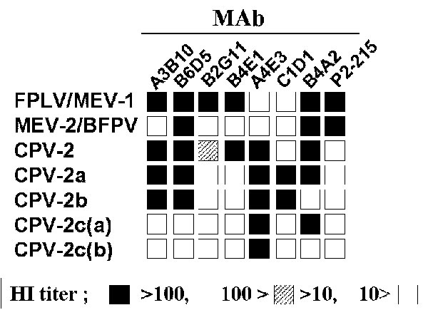 Antigenic profile of feline parvoviruses, including Canine parvovirus 2c (CPV-2c) types. Subtype-specific monoclonal antibodies are used to type the viruses in a hemagglutinin-inhibition test (HI). Mink enteritis virus (MEV-3) shows similar patterns to MEV-2  (2). FPLV = Feline panleukopenia virus; BFPV = blue fox parvovirus.