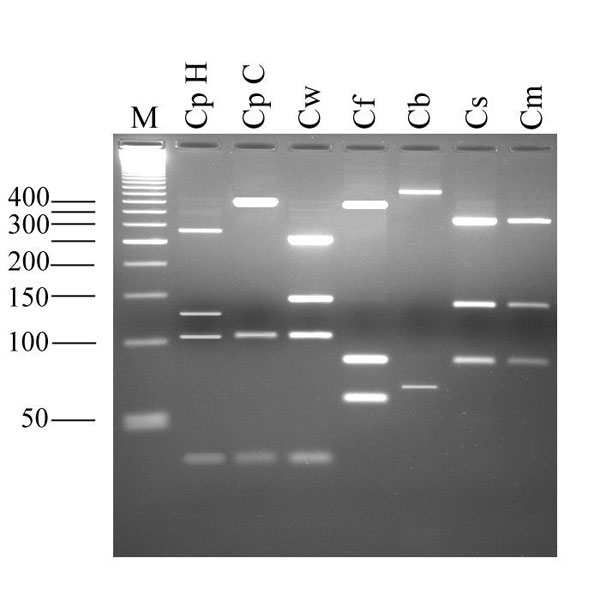 Electrophoretic separation of Cryptosporidium oocyst wall protein gene-polymerase chain reaction products digested with the endonuclease RsaI. Lane M, 50-bp size ladder; CpH, Cryptosporidium parvum human genotype; CpC C. parvum calf genotype; Cw, C. wrairi; Cf, C. felis; Cb, C. baileyi; Cs, C. serpentis; Cm, C. muris.