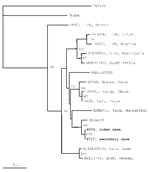 Thumbnail of Phylogenetic relationships based on 255-nt fragment from the small RNA segment between sequences obtained from this study and respective representative Crimean-Congo hemorrhagic fever strains from GenBank. In the phylogenetic tree, sequences of other two nairoviruses, Dugbe and Hazara, were included; Hazara virus was used as outgroup. The numbers indicate percentage bootstrap replicates (of 100) calculated by using SEQBOOT, DNADIST, FITCH, and CONSENSE from the PHYLIP package (7); values <70% are not shown. Horizontal distances are proportional to the nucleotide differences. The scale bar indicates 10% nucleotide sequence divergence. Vertical distances are for clarity only.