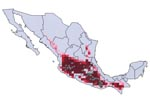 Thumbnail of Modeled geographic distribution of Triatoma barberi, shown with known occurrence points used to create and test the ecologic niche model. Dark red = 100% of best-subsets models predict presence, medium red = 75% of best-subsets models predict presence, light red = 50% of best-subsets models predict presence, lightest red = any best-subsets model predicts presence.