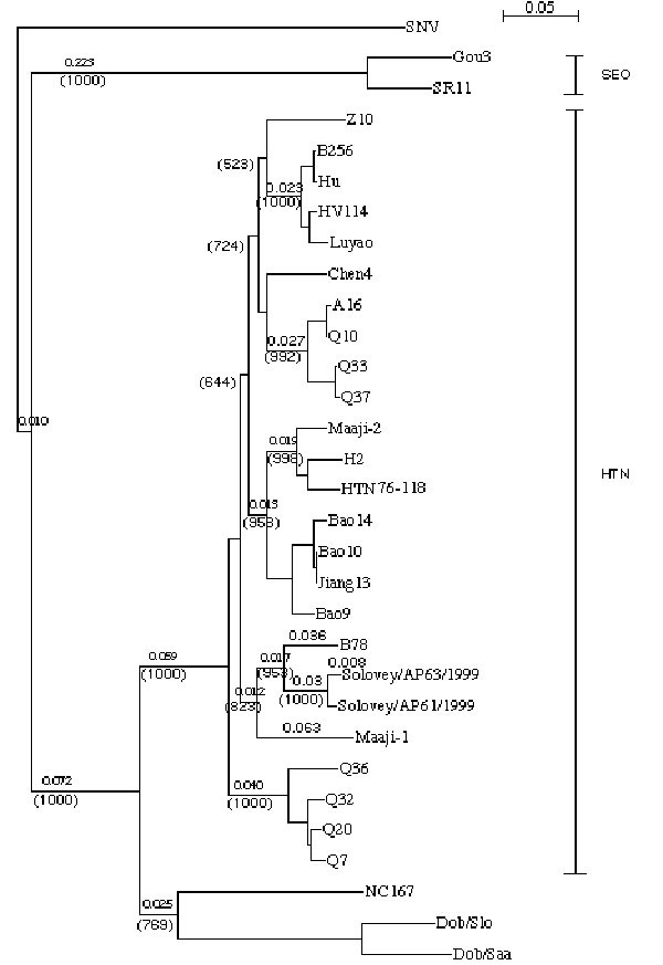 Phylogenetic tree of hantavirus partial S (nt 1216-1666) segments. Tree was constructed by using ClustalX (ver. 1.81) program. Numbers above the branches are distances and in parentheses are bootstrap support values for 1000 replicates.