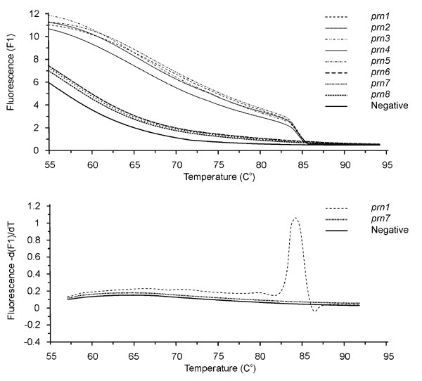 A. Melting curves from the allele-specific amplification assay, showing the presence of amplified products from prn1-5 and the absence of amplification from prn6-8 and the negative control. B. Corresponding melting peaks derived from the melting curve. Prn1 represents the prn1-5 types; prn7 represents prn6-8 types and the negative control.
