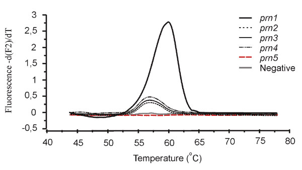 Curves showing the dissociation of fluorescence resonance energy transfer probe assay probes from the polymerase chain reaction products of different prn types. Negative control includes all reagents but no template DNA.