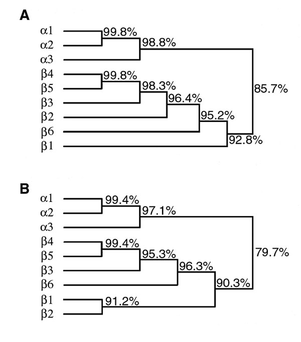 Dendrograms depicting the relationships among bfpA alleles (A) and predicted bundlin proteins (B). Percentage identities are indicated.