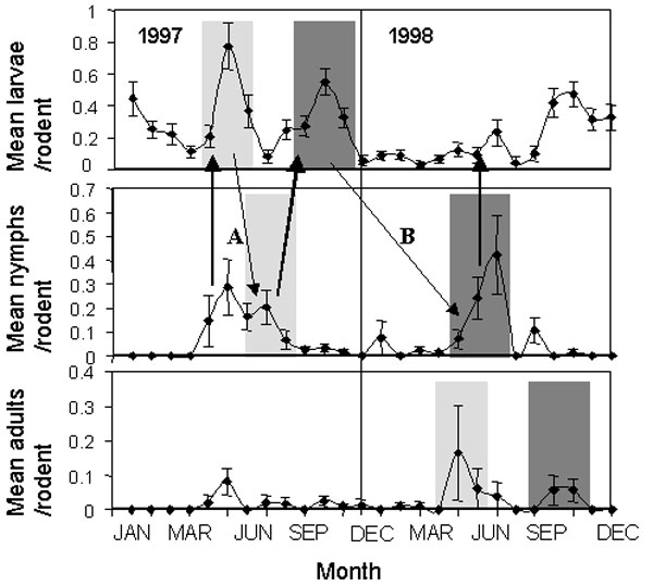 The mean (+/- SE) numbers of larval, nymphal, and adult Ixodes trianguliceps ticks counted per rodent at 4-week intervals, 1997–1998. Shaded areas of similar intensity indicate ticks of different instars that may have belonged to the same cohort, according to interstadial development times deduced by Randolph (21). Arrows indicate potential transmission cycles: bold arrows indicate potential transmission from infected nymphs to uninfected larvae by means of rodent infections. Fine arrows indicat