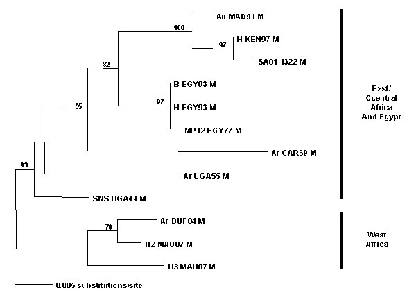Maximum likelihood phylogram of African Rift Valley fever virus strains (see Table 2) and mosquito isolate from the Kingdom of Saudi Arabia based on a 655-bp DNA fragment from the M segment (4).