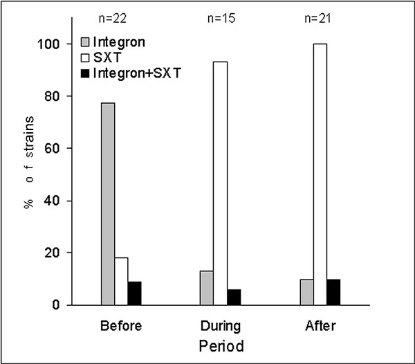 Distribution of class I integrons and SXT elements in Vibrio cholerae El Tor strains isolated before, during, and after the O139 outbreak.