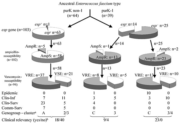 Hypothetical evolutionary scheme for Enterococcus faecium genotypes and phenotypes from an ancestral E. faecium type. Open slices indicate esp-negative, ampicillin-susceptible, and vancomycin-susceptible. Closed slices indicate esp-positive, ampicillin-resistant, and vancomycin-resistant. Numbers indicate the number of strains. Arrows indicate the putative evolutionary direction. Clin-Inf, clinical infectious; Clin-Surv, clinical survey; Comm-Surv, community survey. a, dominant genogroup (A,C) f