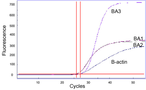 Real-time polymerase chain reaction graph of three B. anthracis markers and B-actin control detected in a pleural fluid specimen from a patient with inhalational anthrax. The horizontal line indicates a threshold value; the vertical lines indicate cross-threshold values for each marker. BA1, primer and probe set targeting a region of pXO2; BA2, primer and probe set targeting a region of pXO1; BA3, primer/probe set targeting a region of B. anthracis chromosome.