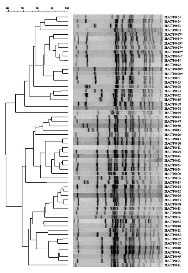 Dendrogram of unique pulsed-field gel electrophoresis patterns of Salmonella Newport. The 58 patterns represent all patterns received at the State Laboratory Institute during April 1999–April 2001. * indicates multidrug-resistant S. Newport patterns.