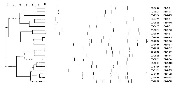 Dendrogram showing Campylobacter fla–reverse fragment length polymorphism types.