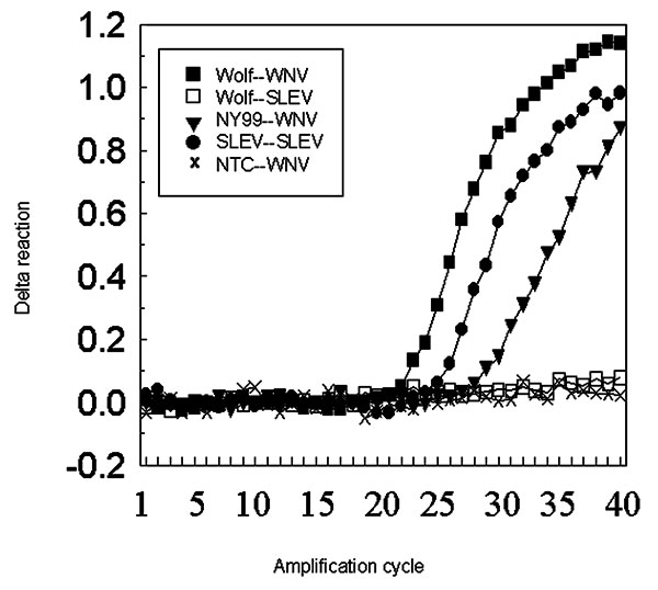 Real-time reverse transcriptase polymerase chain reaction of RNA extracted from the wolf brain. The amplification was duplexed with primers and probes for West Nile and St. Louis encephalitis viruses detected with fluorochrome dyes, FAM and VIC, respectively. Test and control samples were run in parallel and in duplicate (extraction and amplification) with consistent results. Delta reaction on the y axis represents the change in threshold fluorescence. The box lists the source of the template nu