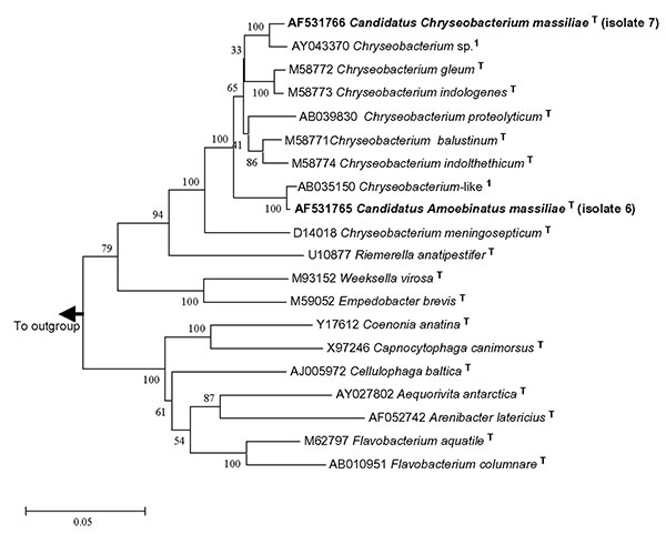 16S rDNA tree showing relationship of isolates 6 and 7 with related Flavobacteriaceae. The tree was constructed by using the neighbor-joining method, based on the nearly complete sequence (1,283 nt) of the 16S rDNA gene. Bootstrap values resulting from 100 replications are at branch points. Staphylococcus aureus was used as an outgroup.