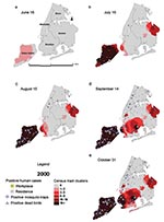 Thumbnail of Dead bird clusters, West Nile virus (WNV)-positive dead birds, human cases, and mosquito traps, New York City, 2000. The shading represents the cumulative frequency of dead bird clusters in each census tract as of the date of analysis. Cumulative WNV-positive birds and mosquitoes are displayed on the basis of their date of collection; human cases are shown on the basis of their date of onset of illness.