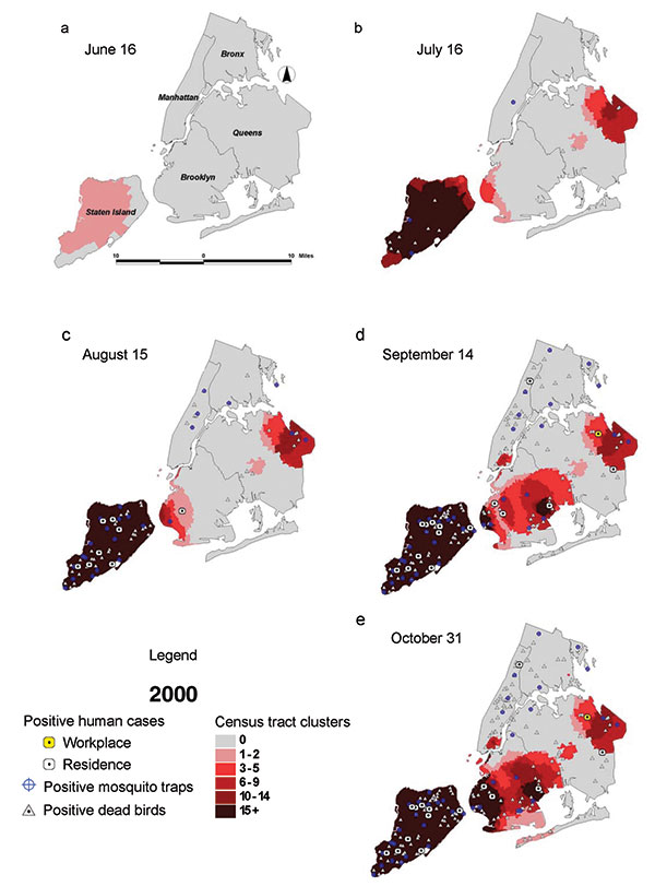Dead bird clusters, West Nile virus (WNV)-positive dead birds, human cases, and mosquito traps, New York City, 2000. The shading represents the cumulative frequency of dead bird clusters in each census tract as of the date of analysis. Cumulative WNV-positive birds and mosquitoes are displayed on the basis of their date of collection; human cases are shown on the basis of their date of onset of illness.