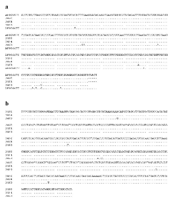 Genetic variation in the nucleotide sequences of Giardia microti parasites in the small subunit ribosomal RNA (SSU rRNA) (a) and triosephosphate isomerase (TPI) (b) genes.