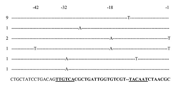 Sequences of Escherichia coli AmpC promoters showing mutations detected in cephamycin-resistant strains. The consensus sequence for E. coli K12 is shown in the last row. The promoter region is in boldface. The –35 and –10 (Pribnow box) hexamers are underlined. The number of strains with these mutations is indicated on the left.
