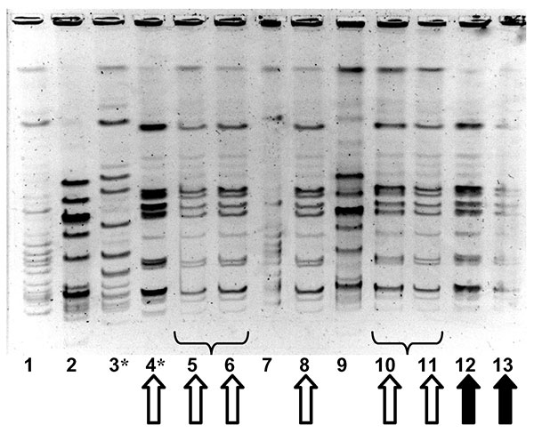 Molecular epidemiology of group A streptococcal strains in outbreak 2. Pulsed-field gel electrophoresis, demonstrating relatedness of group A streptococcal isolates from facility staff and residents. Lanes 1 and 7 contain an ATCC quality control strain. Solid arrows denote identical strains from two of the three persons in whom fatal invasive group A streptococcal infection developed; the third person with invasive disease had an electrophoretically identical strain (not shown). Hollow arrows de