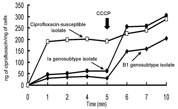 Accumulation of ciprofloxacin by the two ciprofloxacin-resistant isolates of genosubtype Ia of Salmonella enterica serotype Typhimurium and genosubtype B1 of S. enterica serotype Choleraesuis and one clinical isolate of S. enterica serotype Typhimurium (ciprofloxacin MIC = 0.06 μg/mL). Carbonyl cyanide m-chlorophenylhydrazone (CCCP) (100 μM) was added at the time indicated by the arrow.