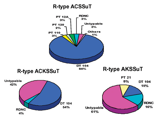 Distribution of Salmonella Typhimurium phage types among resistance patterns.