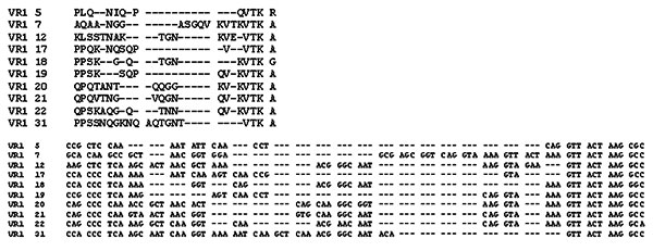 "Alignment of the amino acid and corresponding nucleotide sequence of each VR1 family ""prototype."""