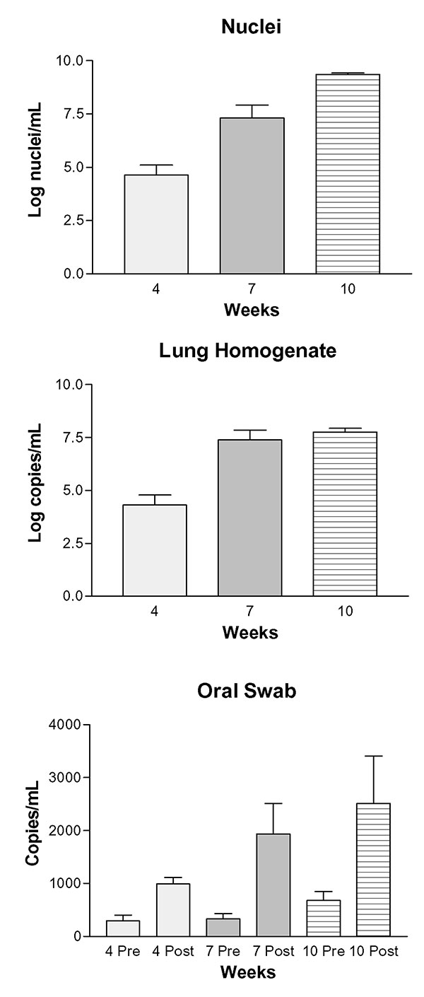 Progression of Pneumocystis carinii pneumonia measured by enumeration of organisms and real-time PCR of DNA extracted from lung homogenates and oral swabs. Panel A: Log P. carinii nuclei per mL of homogenized rat lung assessed by microscopic enumeration of lung homogenates; 4 wk vs. 7 wk, p < 0.001; 4 wk vs. 10 wk, p < 0.001; 7 wk vs. 10 wk, p < 0.001. Panel B: Log-transformed copies of P. carinii-specific DNA (mtLSU) per mL of lung homogenate; 4 wk vs. 7 wk, p < 0.001; 4 wk vs. 10 w