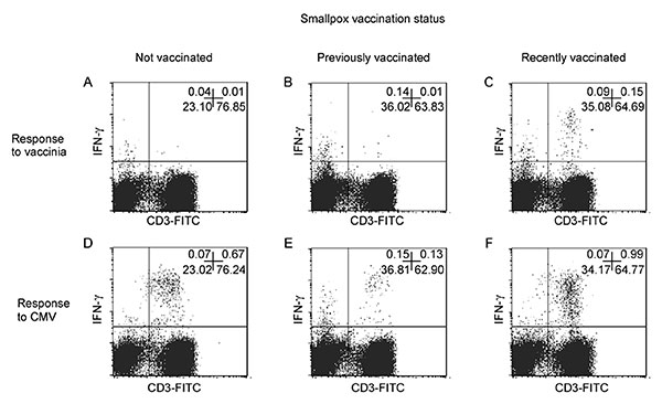 Flow cytometric analysis of T-cell responses to smallpox antigens after recent smallpox vaccination and in long-term vaccinated or not vaccinated persons. Interferon (IFN)-γ synthesis by T cells after an in vitro stimulation with vaccinia antigens was analyzed in eight healthy donors selected as recently vaccinated, long-term vaccinated, and not vaccinated persons. A representative experiment is reported in this figure. Panels A and D refer to an unvaccinated healthy donor (25-year-old white man