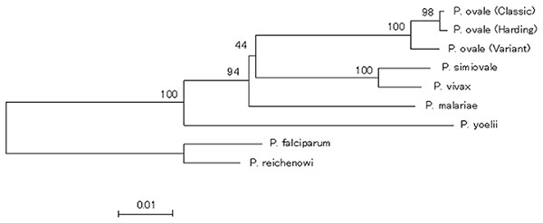 A dendrogram based on cytochrome b sequences of Plasmodium species including P. ovale variant and classic isolates. Bootstrap values are provided as percents over 1,000 replications.