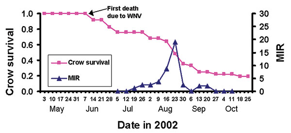Survival curve (Kaplan-Meier curve; staggered-entry method) (10,11) for radio-tracked American Crows (N = 39) relative to the weekly minimum infection rates (MIR) of mosquitoes collected by week at radio-tracked crow roost sites in east-central Illinois in 2002.