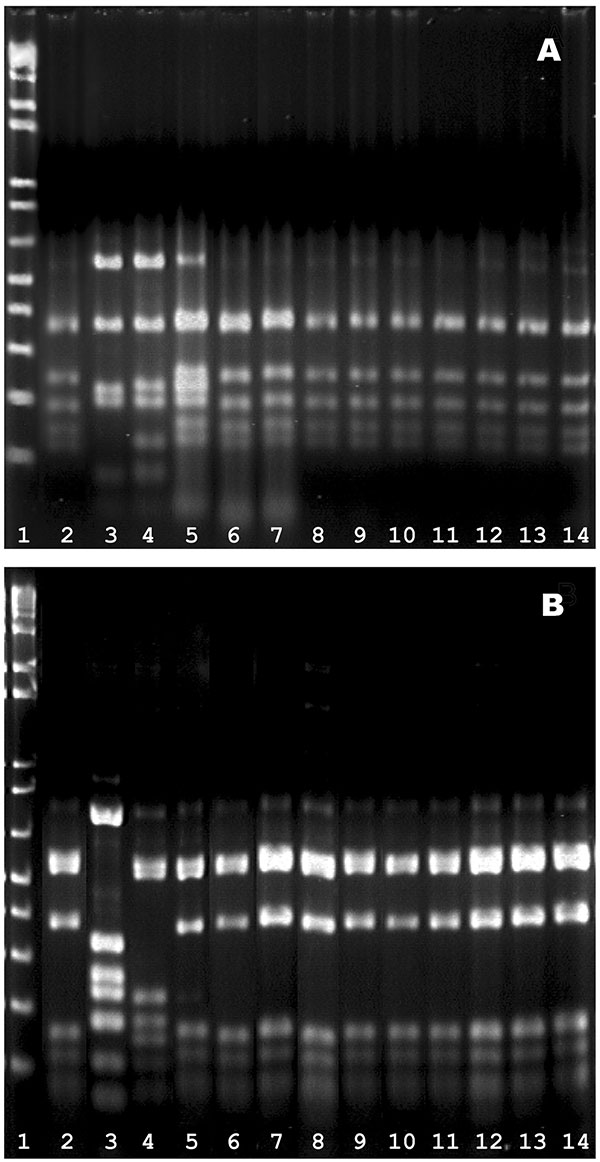 HinfI fingerprints of the pbp genes. A) pbp2b profiles. Lanes 1, marker; 2, Spain23F-1 clone (SP264, ATCC 700669); 3, a ciprofloxacin-resistant, levofloxacin-susceptible strain S1D3; 4, Spain6B clone (GM17, ATCC 700670); lane 5−14, 10 isolates of levofloxacin_resistant pneumococci (S3F7, S2H9, S1B7, S1B9, S1D5, S2D6, S1D2, S2F3, 186G1, and 216D2 respectively); B) pbp2x profiles. The lanes were arranged in the same sequence as in (A).