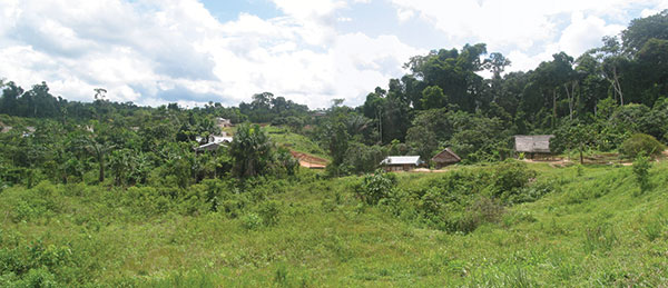 A typical view of a rural village areas near Iquitos. Near Villa Buen Pastor, located 21 km along the major (unfinished) road that leads from Iquitos to Nauta, substantial secondary growth of forest is evident after removal of primary forest for human agricultural and living activities. One must walk approximately 1–2 km from the road to get to the village and a further 1–2 km from Villa Buen Pastor to Moralillo, another village studied in this report.