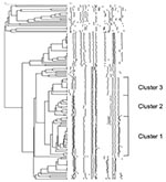 Thumbnail of Dendrogram depicting the DNA fingerprints of Salmonella enterica serovar Paratyphi B dT+ identified from 2000 through 2002. Multidrug-resistant clonal groups labeled clusters 1 to 3 are shown.