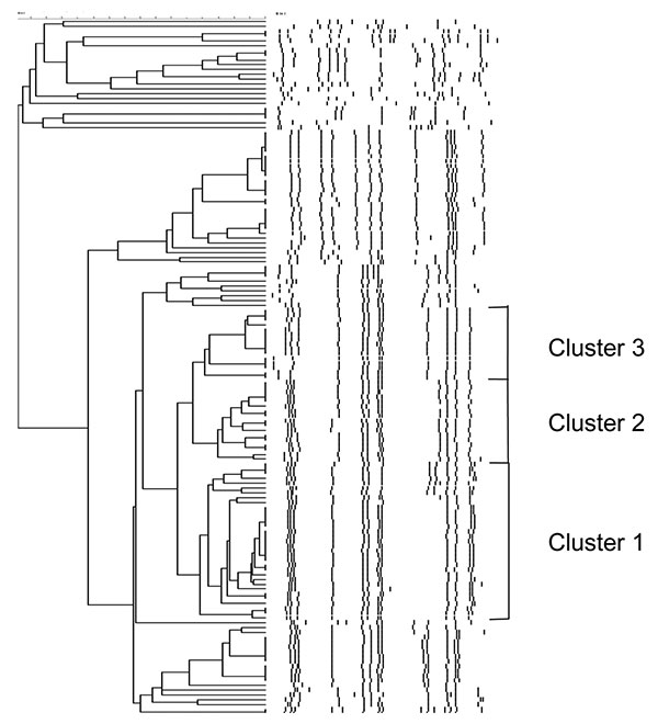 Dendrogram depicting the DNA fingerprints of Salmonella enterica serovar Paratyphi B dT+ identified from 2000 through 2002. Multidrug-resistant clonal groups labeled clusters 1 to 3 are shown.