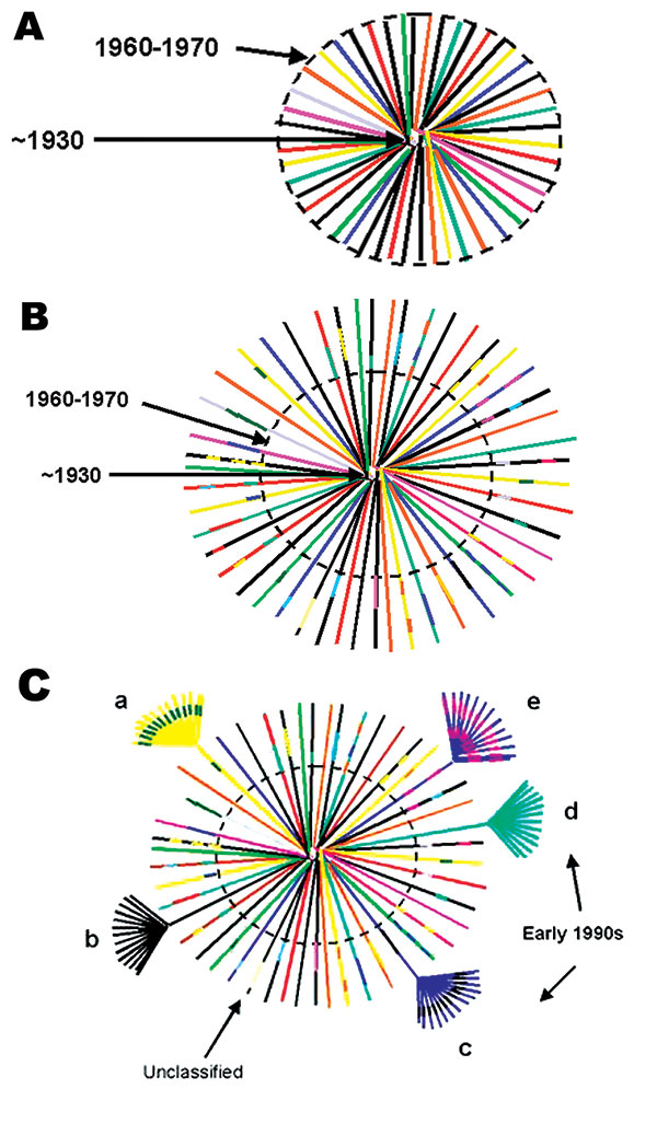 Hypothetical model of HIV-1, group M evolution. A. Star phylogeny representing the evolution of the ancestral HIV-1, group M virus that was able to adapt in humans and was transmitted among rural populations in Central Africa from approximately the 1930s (22). Over time, the viruses would have become increasingly genetically distinct from each other and the original parental strain. The dotted circle denotes the beginning of migration from these remote areas to cities in Central Africa (approxim