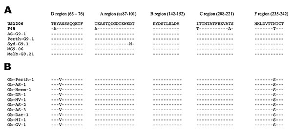 Deduced amino acid sequences of the VP7 antigenic regions of rotavirus G9P[8] strains. A) Outbreak strains. B) Nonoutbreak strains. The VP7 sequences of the standard G9 strain (US1206) and the Australian nonoutbreak strains were obtained from GenBank. Accession numbers are as indicated: US1206: AJ250271, Perth G9.1: AY307094, Syd-G9.1: AY307093, MG9.06: AY307085, Melb-G9.21: AY307090. The sequence of rotavirus strains F45 was obtained from Kirkwood et al. (33). All other sequences were determine