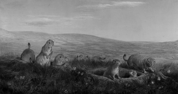 William Jacob Hays (1830-1875). Prairie Dog Village (1860). Oil on canvas (25 1/2 x 47 1/2). Collection of National Museum of Wildlife Art, Jackson Hole, WY