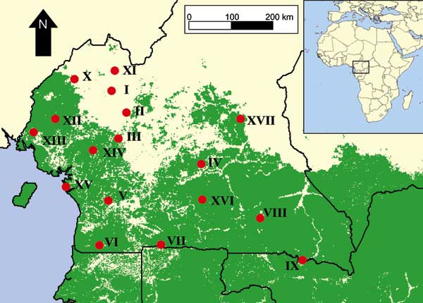 Map of study sites in southern Cameroon in relation to the distribution of lowland tropical forest in central Africa (in green).