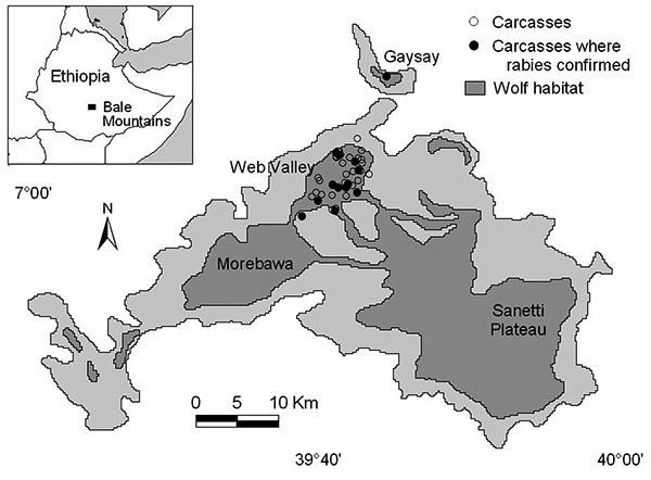 Ethiopian wolf subpopulations, habitat and carcass locations during the reported rabies outbreak in the Bale Mountains, Ethiopia. Samples were not obtained from all carcasses, but those confirmed rabies positive are depicted with filled circles.