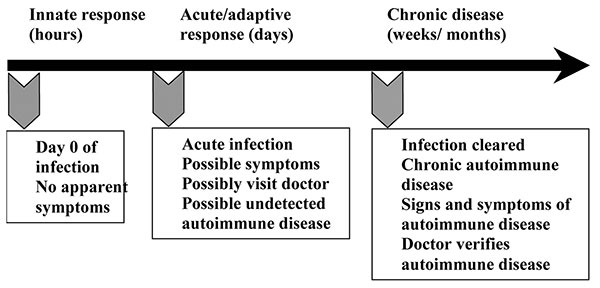 Infections occur before the onset of symptoms of autoimmune disease, making links to specific causative agents difficult. When a person is first infected (day 0), usually no symptoms are apparent. Signs and symptoms of autoimmune disease are clearly present and easily confirmed by physicians during the chronic stage of autoimmunity. However, the infection has been cleared by this time, making it difficult to establish that an infection caused the autoimmune disease. Modified from (16).