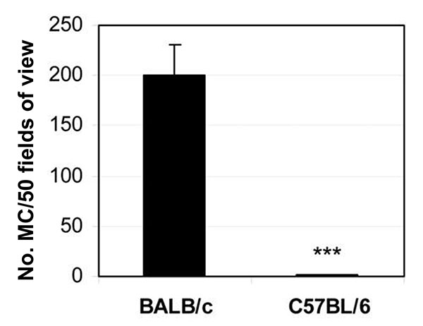 Mast cells are increased in the spleens of susceptible BALB/c mice 6 hours after CB3 infection. Data are represented as the mean ± standard error of the mean. ***, p < 0.001. Modified from (33).