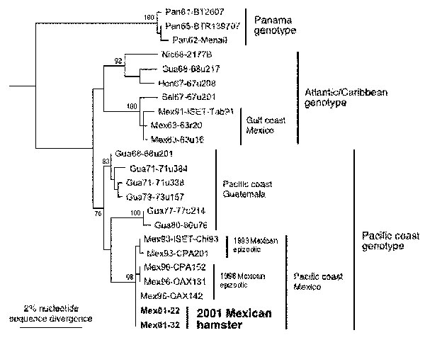 Maximum parsimony phylogenetic tree derived from partial PE2 envelope glycoprotein precursor gene sequences showing relationships of the newly isolated Venezuelan equine encephalitis virus (VEEV) strains from sentinel hamsters (Mex01-22 and Mex01-32) to other subtype IE strains sequenced previously (19). Strains are designated by country abbreviation followed by year of isolation and strain designation. Numbers indicate nucleotide substitutions assigned to each branch.